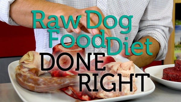 raw dog diet