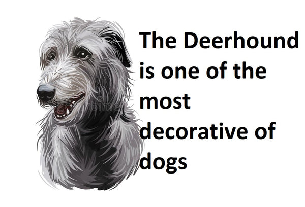 THE DECORATIVE DEERHOUND,deerhound cross,irish big dog,greyhound dog,coursing deer with dogs,a hound dog,wolf hunting dog,xigou dog,irish wolfhound wiki