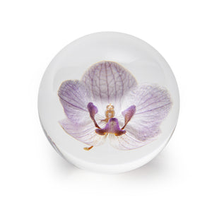 Art Glass Floraculture Paperweight: Orchid