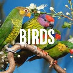 Bird Themed Animal Jewelry and Products
