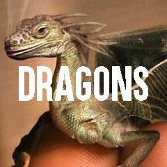 Dragon Themed Animal Jewelry and Products