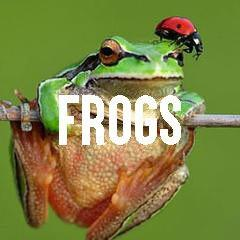 Frog Themed Animal Jewelry and Products