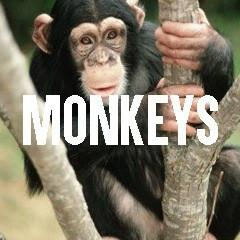 Monkey Themed Animal Jewelry and Products