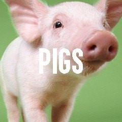 Pig Piglet Themed Animal Jewelry and Products