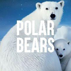 Polar Bears Inspired Animal Jewelry and Products