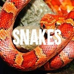 Snakes Inspired Animal Jewelry and Products