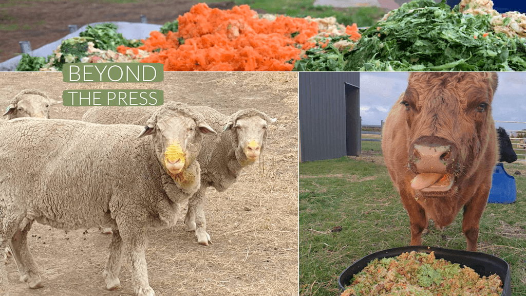 cows and sheep eat juice cleanse pulp