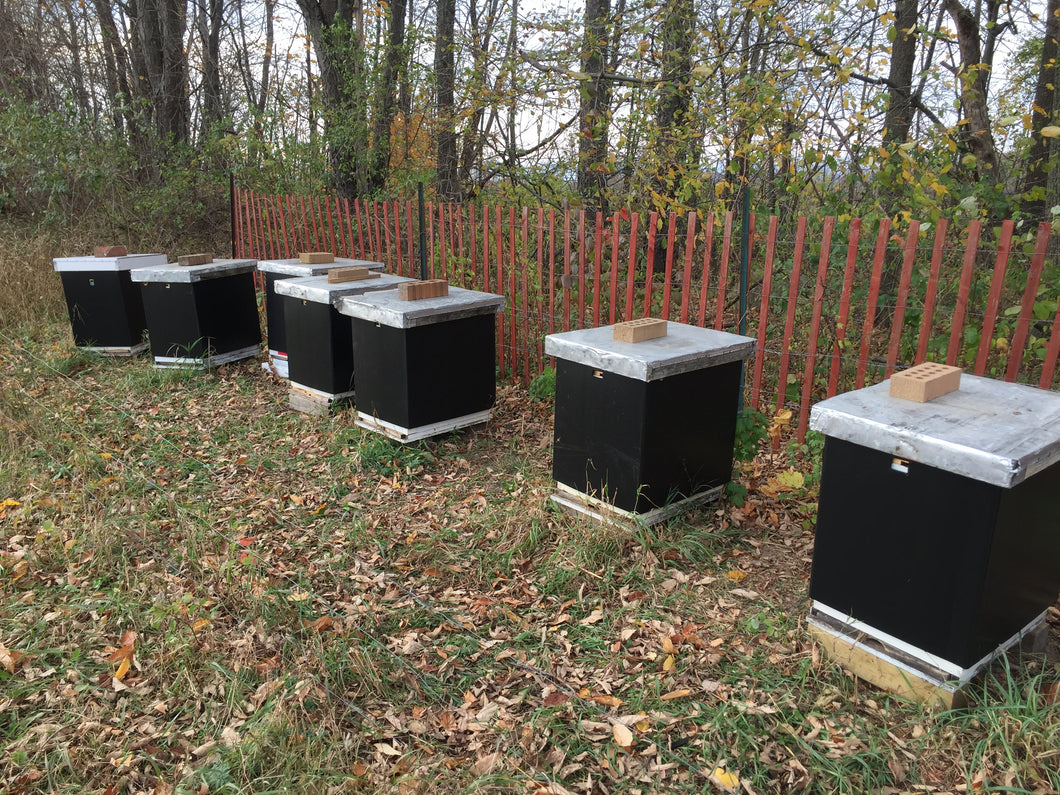 Fall Preparedness for your Bees August 25, 2019