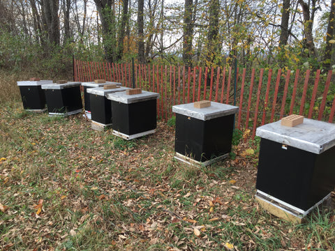 Fall Preparedness for your Bees
