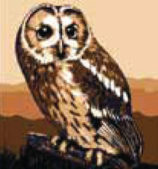 Collection d'Art Printed Needlepoint Tapestry Canvas Kit Needlecraft 20x20cm - Brown Owl