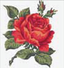 Collection d'Art Printed Needlepoint Tapestry Canvas Kit Needlecraft 20x20cm - Red Rose