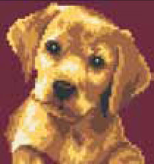 Collection d'Art Printed Needlepoint Tapestry Canvas Kit Needlecraft 20x20cm - Labrador Puppy