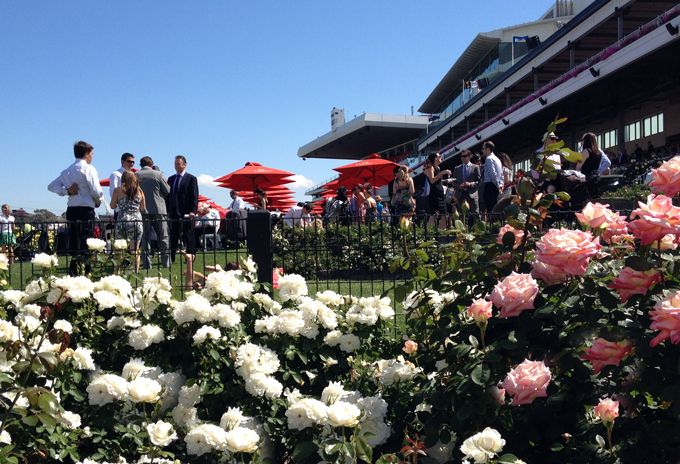 The Perch in the Birdcage - Stakes Day - 7 November 2020