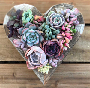 Succulent heart, wreath, succulents, garden, gift, mothers day gift, vertical garden, fairyblooms