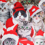 Cat Family - xmas sweater