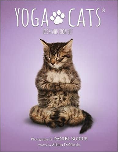 Yoga Cats Card Deck and Book Set Boxed by Daniel Borris Alison DeNicola