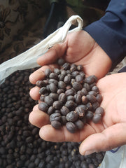 Naturally Processed coffee from nepal