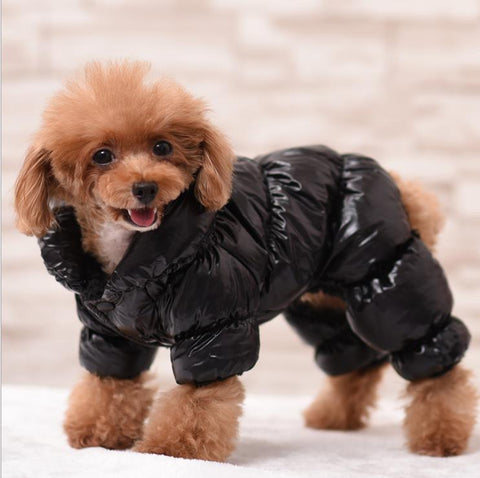 Waterproof Dog Coat For Small Dog Winter Puppy Jacket