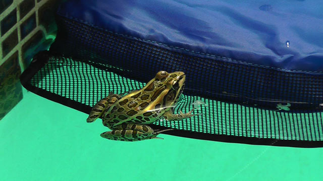 Leopard Frog on Skirt