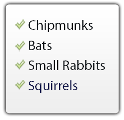 chipmunks, bats, small rabbits, squirrels use The FrogLog