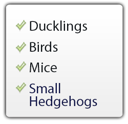 ducklings, birds, mice, small hedgehogs use The FrogLog