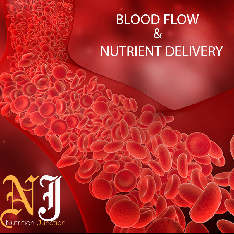 Blood Flow & Nutrient Delivery