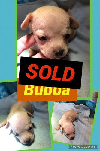 SOLD- Click On Picture For More Info- Deposit for Bubba
