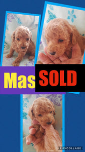 SOLD- Click On Picture For More Info- Deposit for Mason