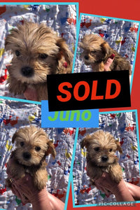SOLD- Click On Picture For More Info- Deposit for Juno