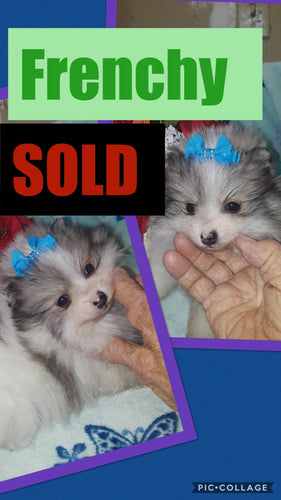 SOLD- Click On Picture For More Info- Deposit for Frenchy