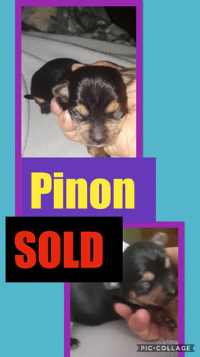 SOLD- Click On Picture For More Info- Deposit for Piñon