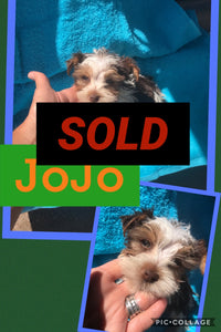 SOLD- Click On Picture For More Info- Deposit for JoJo