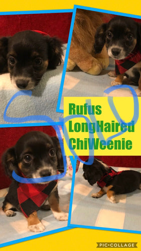 SOLD- Click On Picture For More Info- Deposit for Rufus