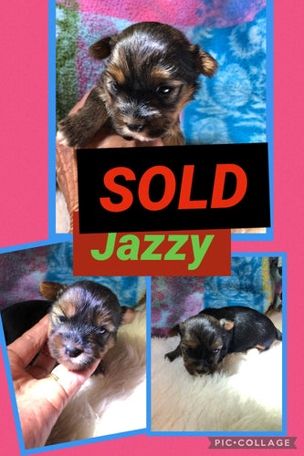 SOLD- Click On Picture For More Info- Deposit for Jazzy