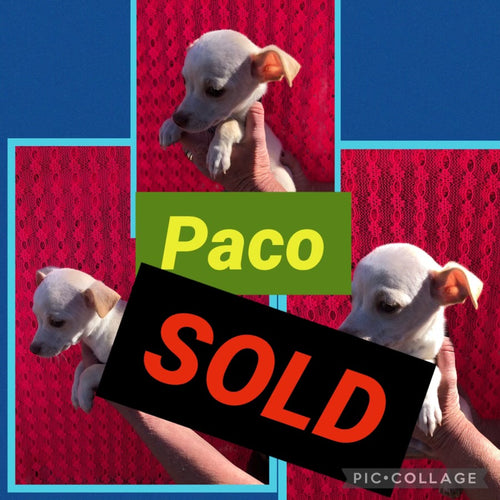 SOLD- Click On Picture For More Info- Deposit for Paco