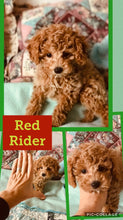 SOLD- Click On Picture For More Info- Deposit for Red Rider