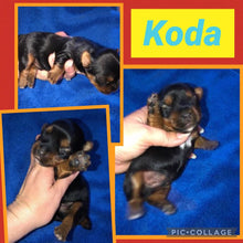 SOLD- Click On Picture For More Info- Deposit for Koda
