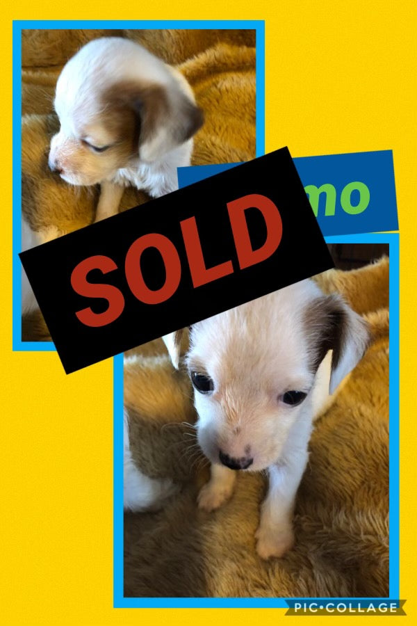 SOLD-Click On Picture For More Info- Deposit for Gizmo