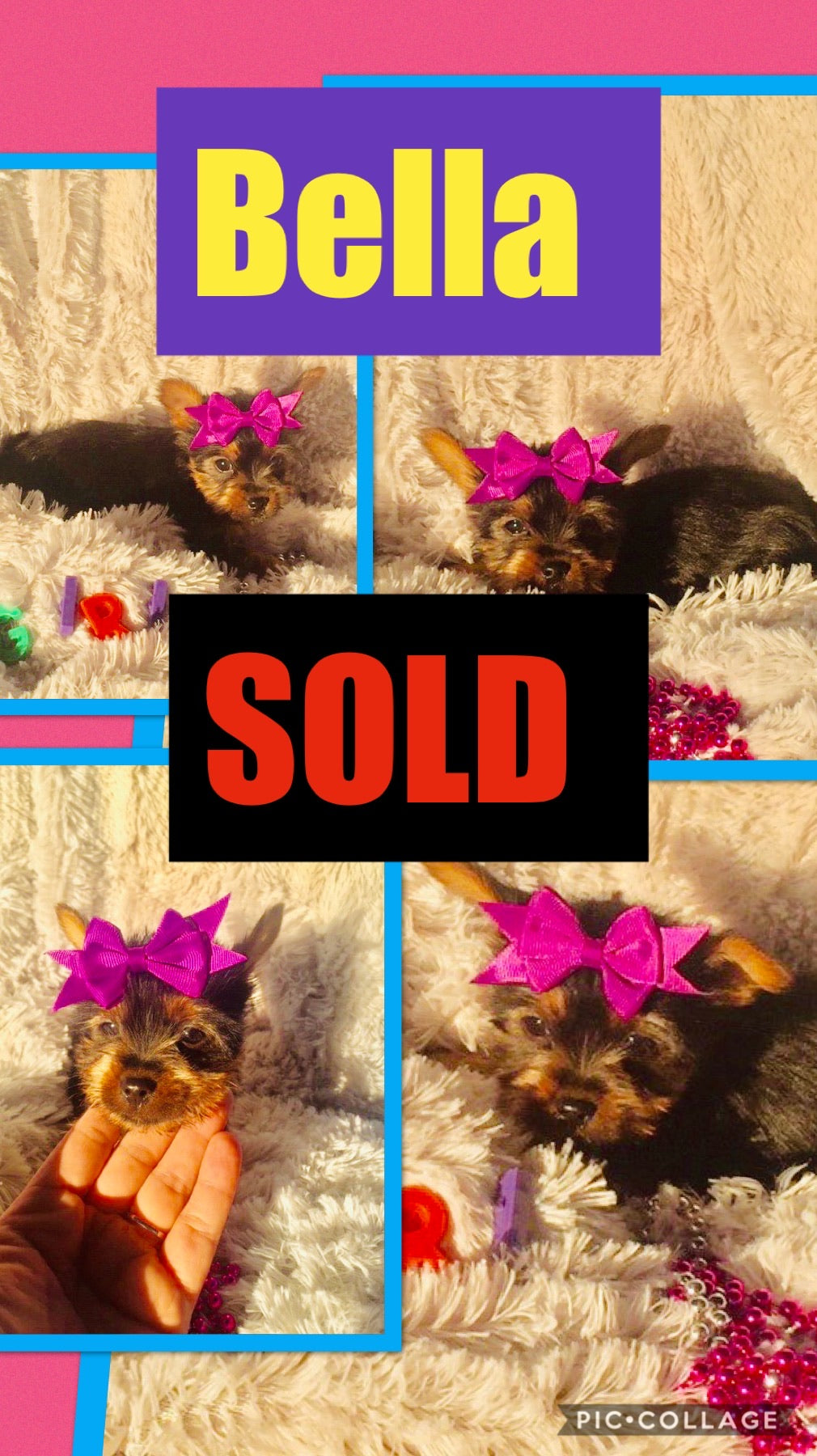 SOLD- Click On Picture For More Info- Deposit for Bella