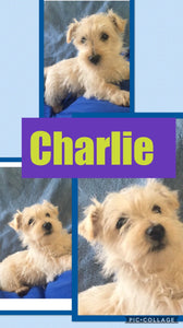 Click On Picture For More Info- Deposit for Charlie