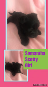 SOLD- Click On Picture For More Info- Deposit for Samantha