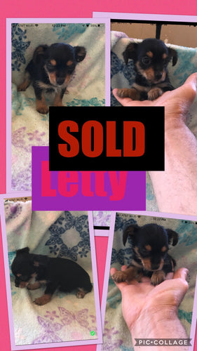 SOLD- Click On Picture For More Info- Deposit for Letty