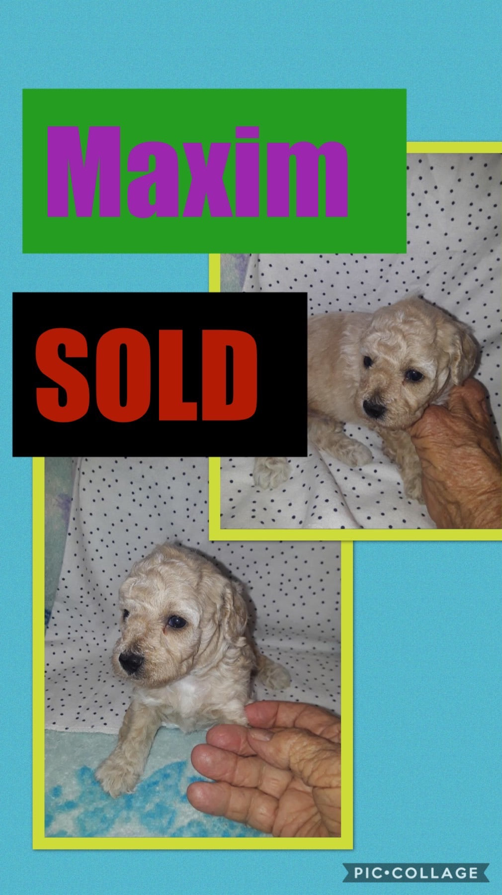 SOLD- Click On Picture For More Info- Deposit for Maxim