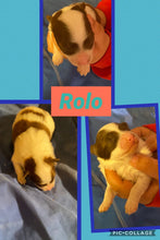 SOLD- Click On Picture For More Info- Deposit for Rolo