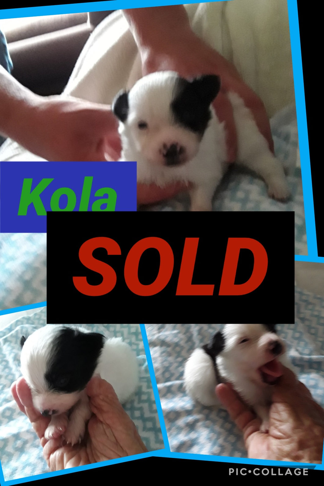SOLD- Click On Picture For More Info- Deposit for Kola