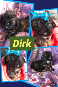 SOLD- Click On Picture For More Info- Deposit for Dirk