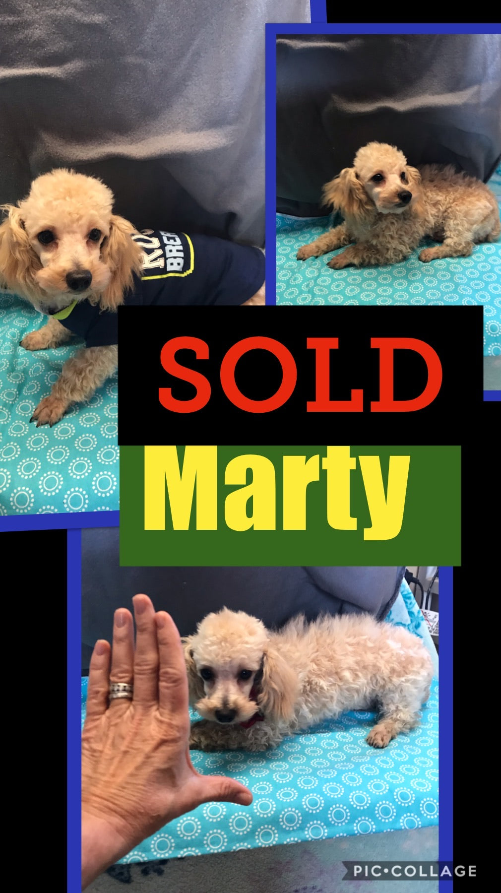 SOLD-Click On Picture For More Info- Deposit for Marty