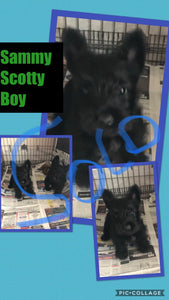 SOLD- Click On Picture For More Info- Deposit for Sammy