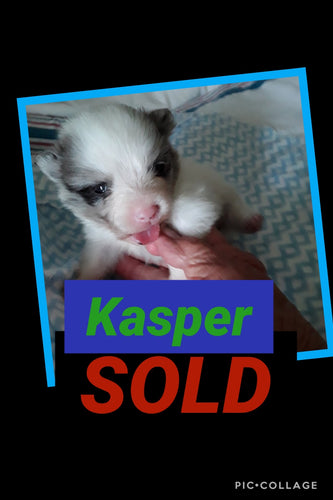 SOLD- Click On Picture For More Info- Deposit for Kasper