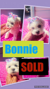 SOLD- Click On Picture For More Info- Deposit for Bonnie
